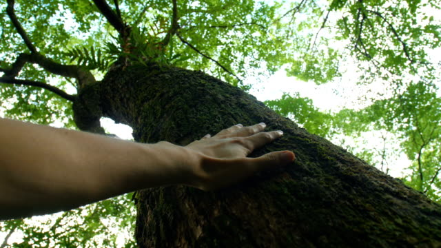 connecting nature in forest - respect stock videos & royalty-free footage