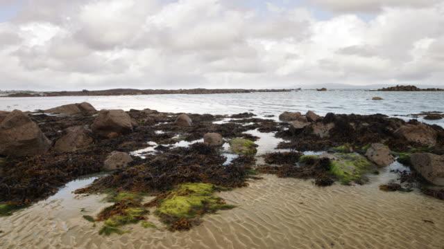 connemara coast of ireland - algae stock videos & royalty-free footage