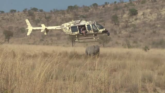 Conservation groups under the umbrella name Rhino 911 have come together to fight rhino poaching in South Africa with new technology including a...