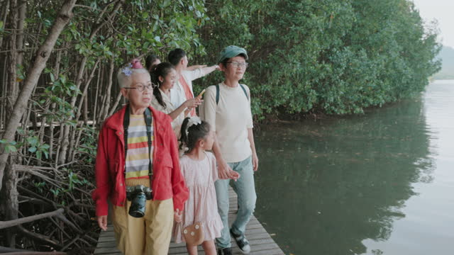 conservationist family traveling mangrove forest-stock video - sustainable tourism stock videos & royalty-free footage