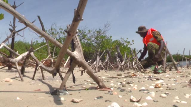 conservationists in senegal are fighting to save their mangrove forests which shelter an abundance of marine life - mangrove forest stock videos & royalty-free footage