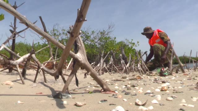 conservationists in senegal are fighting to save their mangrove forests which shelter an abundance of marine life - senegal stock videos & royalty-free footage