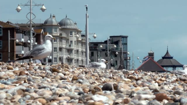 buildup to itv debate england west sussex bognor regis ext seagulls on pebble beach wide shot of family on beach - seagull stock videos & royalty-free footage