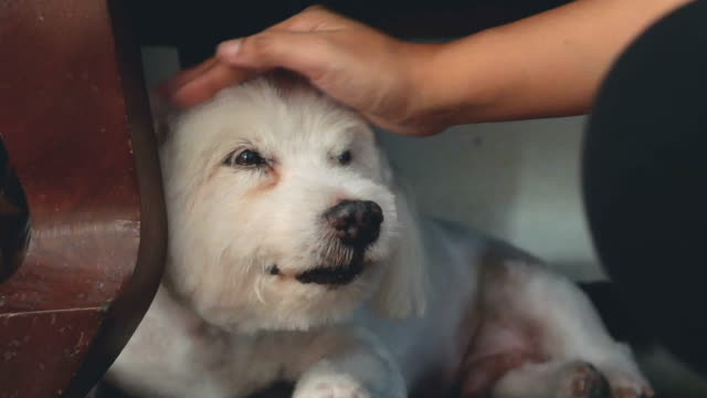 consoling - puppy stock videos & royalty-free footage