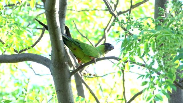 Constanera Sur Ecological Reserve birds Buenos Aires Argentina Parakeet Southern screamer saltator siskin