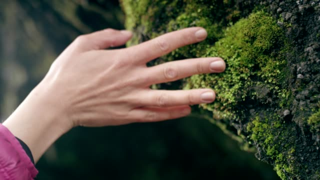 Contact with nature. Woman touching rocks and moss