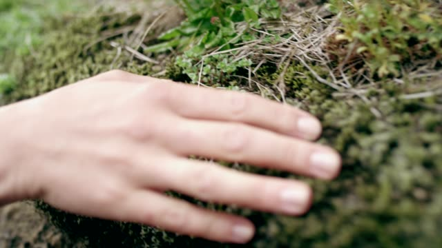 contact with nature. woman touching rocks and moss - moss stock videos & royalty-free footage