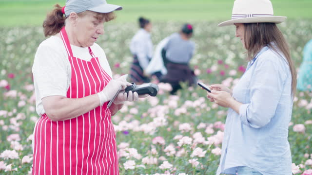 contactless payment. young woman buying decorative rose bushes from a small garden center in a rose plantation. active senior woman running a small farmer's family business, keeping up with technologies. unrecognizable people on the background. - working seniors stock videos & royalty-free footage