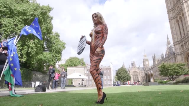 Contains nudity Footage of and interview with supermodel Joanna Krupa bodypainted as a tiger as she protests outside the Houses of Parliament to...
