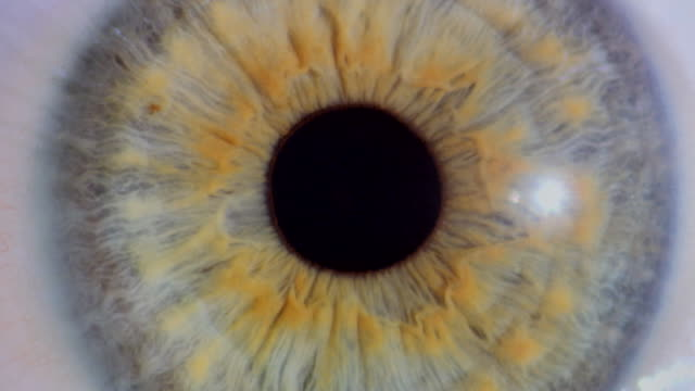 contracting and dilating pupil - close up stock videos & royalty-free footage