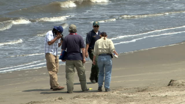 contractors are searching for tarballs along the beach which they photograph and document. bp contractors score beach for tarballs on may 17, 2010 in... - stephenie hollyman stock videos & royalty-free footage