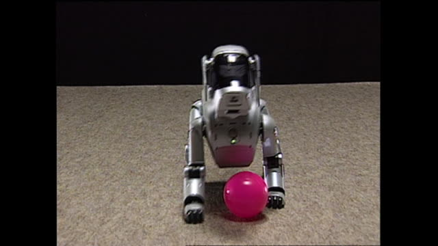 contributor approval required for all uses an 'adult' aibo robot rolls a pink rubber ball - sony stock videos & royalty-free footage
