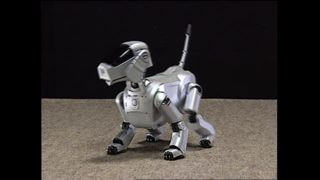 contributor approval required for all uses an 'adult' aibo robot walks around with the gleaming eyes - sony stock videos & royalty-free footage