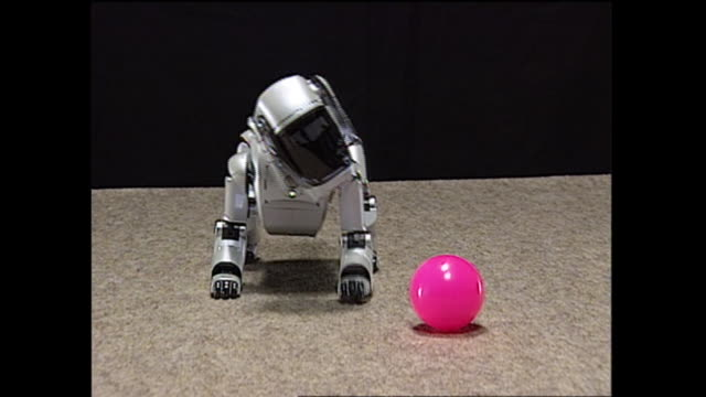 contributor approval required for all uses an aibo robot in his 'adolescence' shows interest in a pink rubber ball - sony stock videos & royalty-free footage