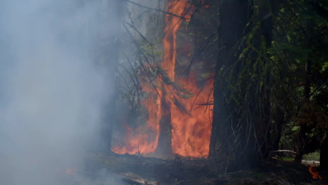 controlled forest fires burning in california, usa - california stock videos & royalty-free footage