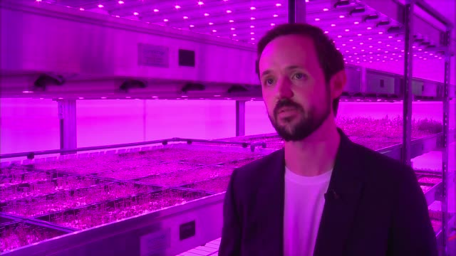 Converted Deptford warehouse used as indoor farm Deptford FOCUS window INT Various shots Microcrops indoor farm with artificial purple light Jamie...