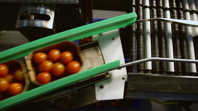 ws ha conveyor belt with boxes of tomatoes / algarrobo, malaga, spain - fließband stock-videos und b-roll-filmmaterial