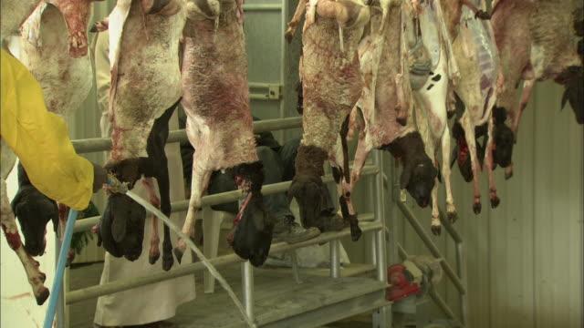 a conveyor moves goat carcasses through a slaughterhouse. - slaughterhouse stock videos & royalty-free footage