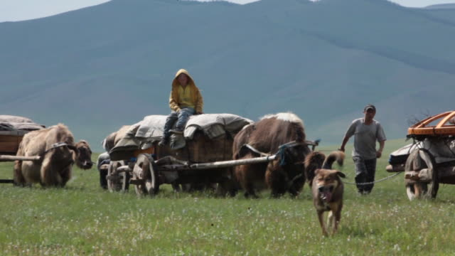 convoy of yak carts on open landscape - animale da lavoro video stock e b–roll