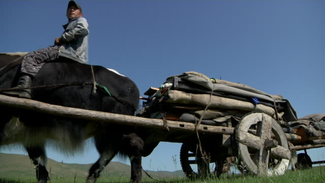 convoy of yak carts passing by - animale da lavoro video stock e b–roll