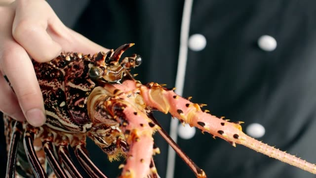 cooking fresh healthy lobster.part of series - lobster stock videos & royalty-free footage