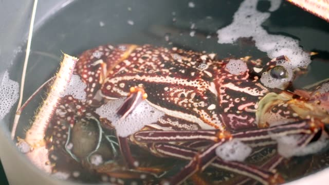 cooking fresh healthy lobster.part of series - lobster seafood stock videos and b-roll footage