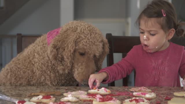kochen einige kekse auf küche counter mädchen allein mit hund haustier - haustier stock-videos und b-roll-filmmaterial