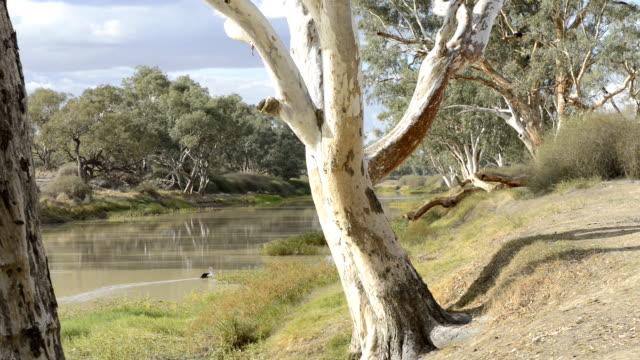 cooper creek - south australia bildbanksvideor och videomaterial från bakom kulisserna