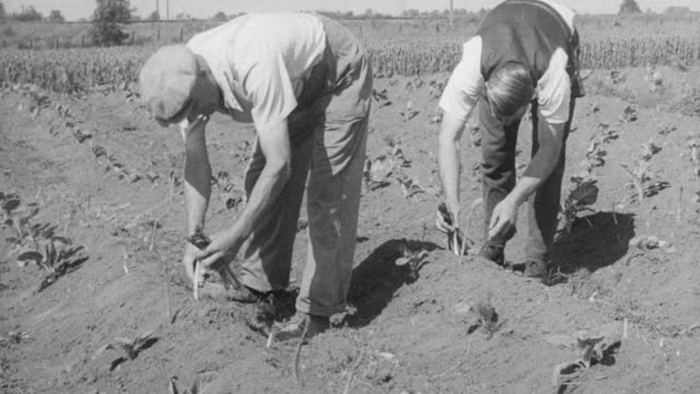 1948 montage cooperative members farming, crating, and loading produce for trucking to cooperative / worchestershire, england, united kingdom - worcestershire stock videos and b-roll footage