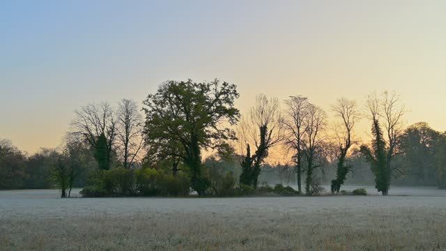 copse in parkland in the morning - copse stock videos & royalty-free footage