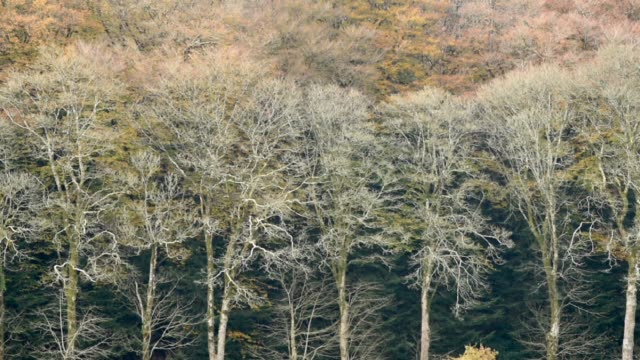 Copse of Deciduous trees in Autumn