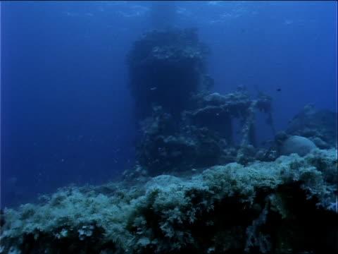 stockvideo's en b-roll-footage met coral and algae covers a shipwreck. - ongewerveld dier