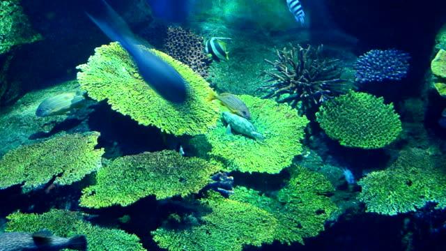 vídeos de stock e filmes b-roll de corais e peixes no mar - organismo aquático