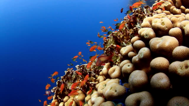 coral and fish - calcium carbonate stock videos and b-roll footage