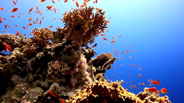 coral and fish - tropical fish stock videos & royalty-free footage