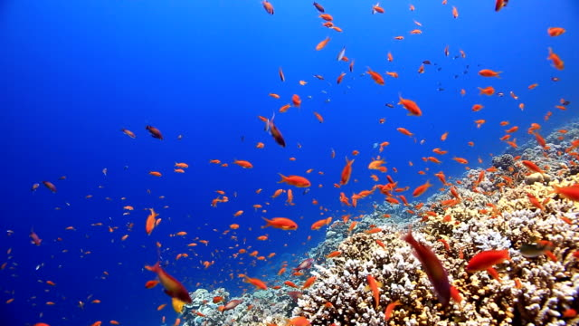 coral and fish - tropical fish stock videos and b-roll footage