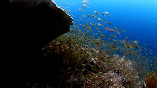 コーラルや魚 - グラスフィッシュ点の映像素材/bロール