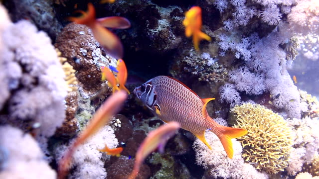 coral and fish - sabah state stock videos and b-roll footage