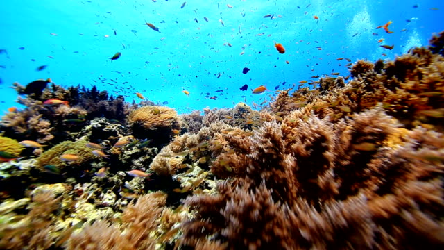 coral and fish - reef stock videos and b-roll footage