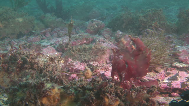Coral and seaweed moving in the current