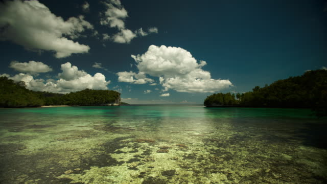 coral bay, raja ampat, indonesia - translucent stock videos & royalty-free footage