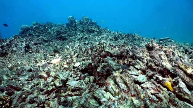 coral bleaching, damaged fragile reef ecosystem - coral stock videos & royalty-free footage
