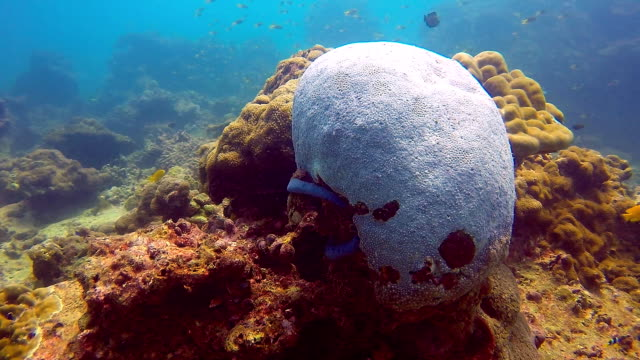 Coral Bleaching, Damaged Fragile Reef Ecosystem
