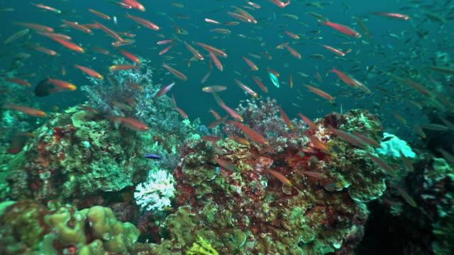 気候変動によるサンゴの漂白効果 - 外骨格点の映像素材/bロール