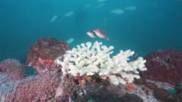 Coral bleaching effects of climate change