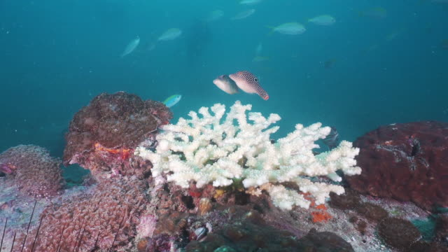 coral bleaching effects of climate change - symbiotic relationship stock videos & royalty-free footage