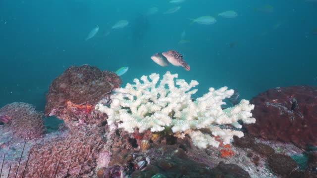vídeos y material grabado en eventos de stock de efectos del blanqueo de coral del cambio climático - coral cnidario