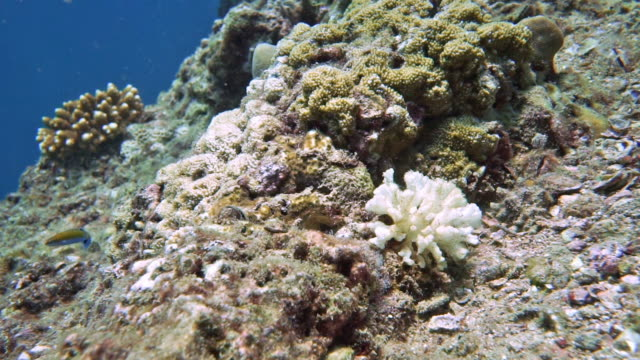 Coral bleaching effects of Global Warming