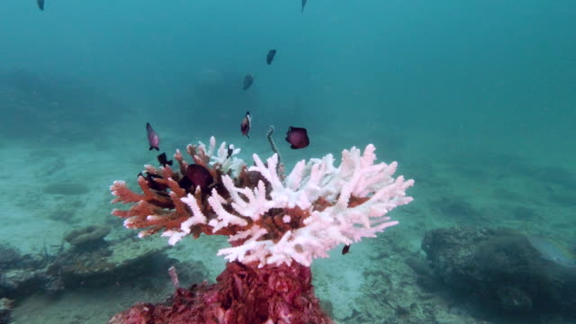 coral bleaching environmental ecocide underwater - ocean acidification stock videos & royalty-free footage