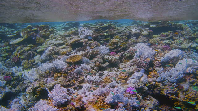 coral bleaching on coral reef on red sea - marsa alam - egypt - red sea stock videos & royalty-free footage
